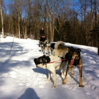 En route vers le Grand Nord - Manitou Mushers - Mauricie