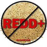 no-redd-rice-1