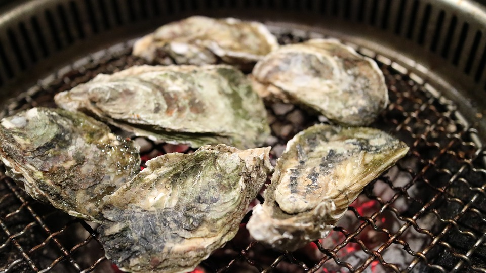oyster-989180_960_720