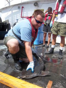 Adam, Scientist, getting ready to measure a tiger shark