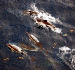dolphins near ship