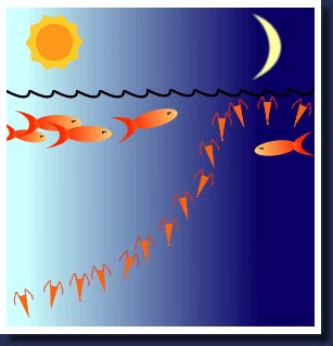 This illustration depicts the diurnal migration of plankton.