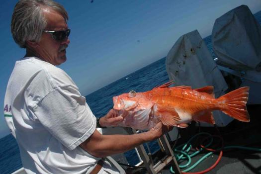 Dr. Russ Vetter holding a Cowcod Rockfish which he took DNA samples from.  This fish could be at least 40 years old.