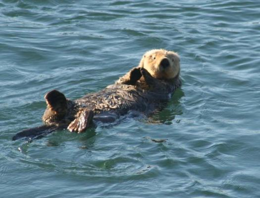 Sea otters bathed and ate nonchalantly on their backs as we passed between the islands.
