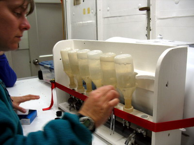 Water samples being filtered through a vacuum system to extract chlorophyll.