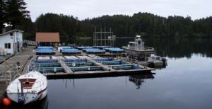 View of the hatchery where the salmon are placed when they are approximately 5-6cm long. Here they are fed and fresh water from upstream constantly flows into these holding tanks.