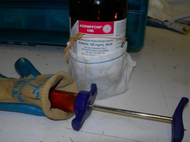 Oxytetracycline is light sensitive, meaning it reacts and breaks down when exposed to enough light. For this reason the bottle is brown and kept in a bag, and loaded syringes are kept inside a glove for ready use.