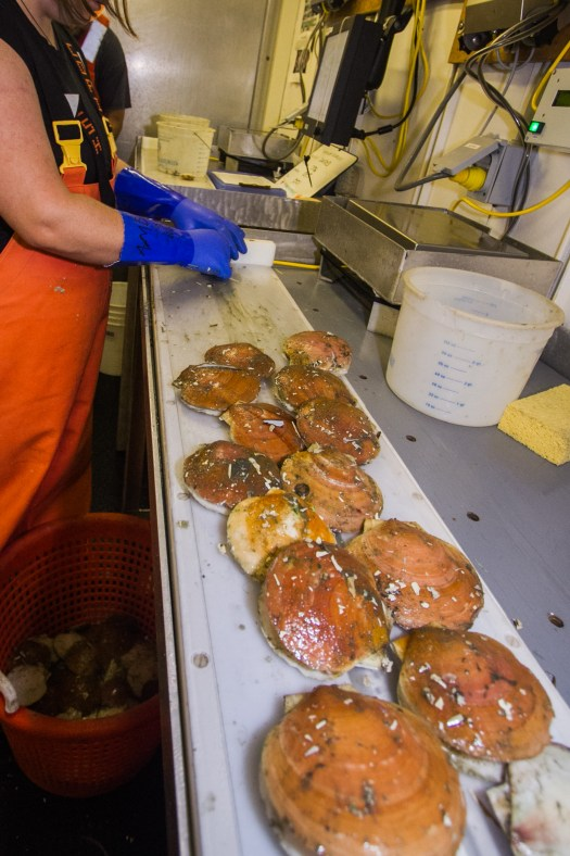 Measuring Scallops with FSCS