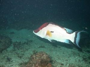 Dive 2246 064 08 56 40