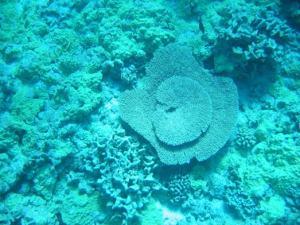 Exploring the reefs