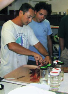 Thomas Nassif watches Roldan Munoz perform a lionfish dissection, removing the stomach and gonads for further analysis.
