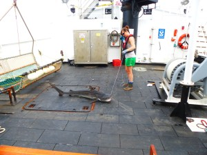 A medium sized Tiger Shark was brought on deck to be measured and tagged. Kristin Hannan stands waiting for it to stop moving.
