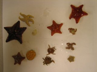 Sea stars and baby invertebrates