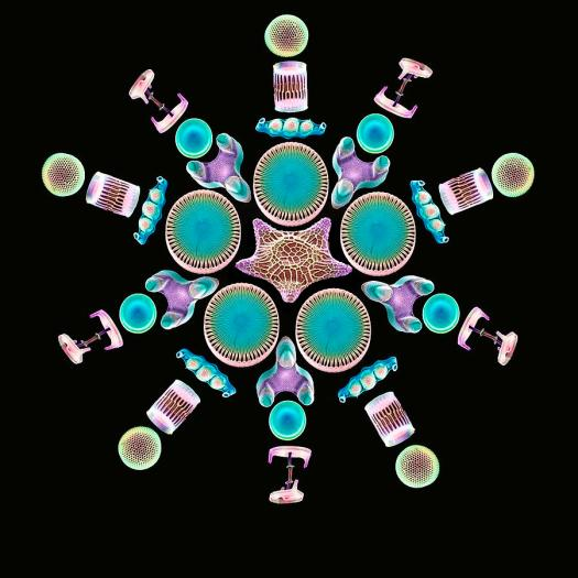 Diatom Frustules. Photo by: 3-diatom-assortment-sems-steve-gschmeissner