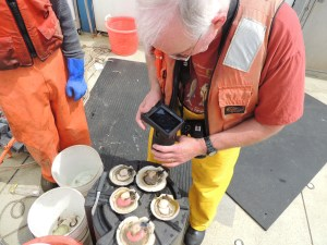 Dr. Gallagher using a 3-D handheld camera (wow!) to take pictures of male and female scallop.  The ones with the bright pink are the females and the white and grey are males.