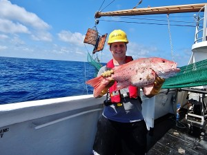 Northern Red Snapper (Lutjanus campechanus)