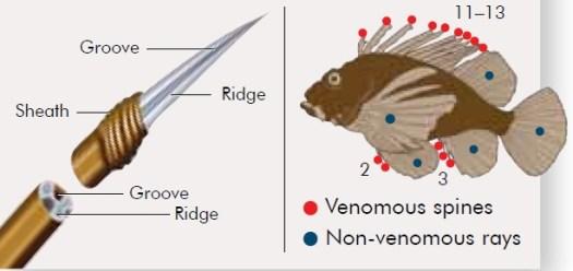 Venomous Spines