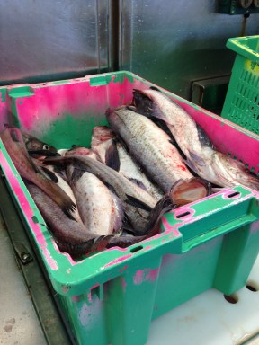 One of many baskets of pollock