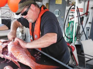 Ken using his skills to filet a Red Snapper