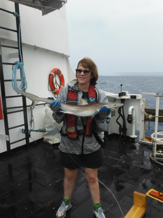 This one is pretty big for an Atlantic sharpnose. Photo Credit: Kristin Hannan