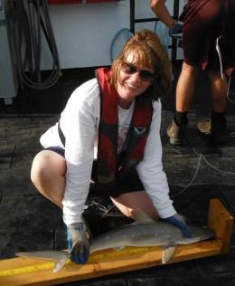 Measuring a Sharpnose Photo: Kristin Hannan