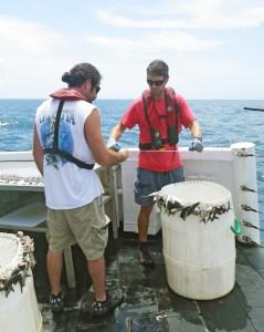 Numbering the baited hooks