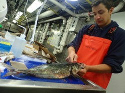 Phill collecting jack mackerel otoliths (Photo Credit: Nina Rosen)