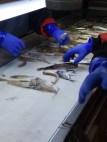 Sorting on the conveyor belt