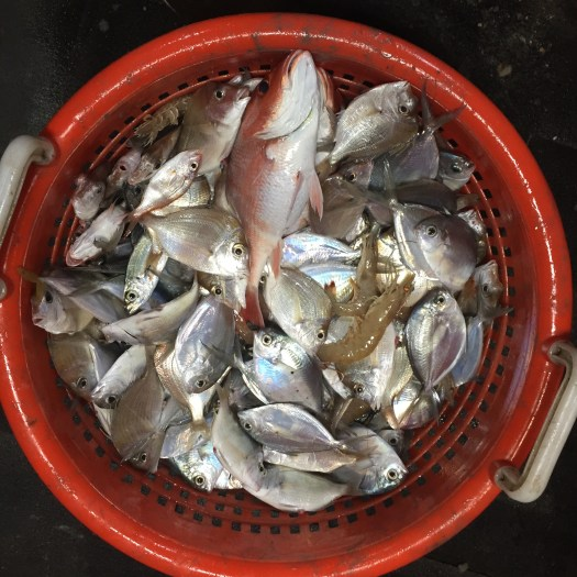 Basket of Fish from Western Gulf
