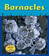The cover of a children's nonfiction book about barnacles.