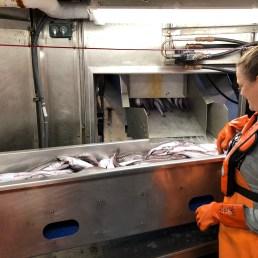 Volunteer Scientist Heather Rippman sorts the catch