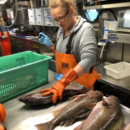 Sorting the rockfish
