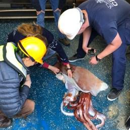 Scientists analyzing the Big Squid