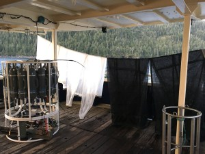 Plankton nets hanging to dry (oceanographer laundry.)