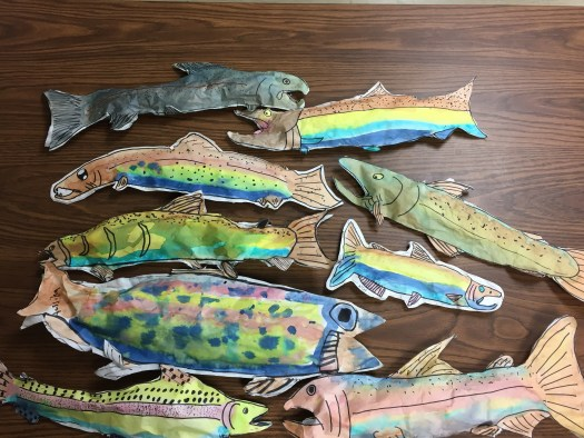 Student salmon drawings