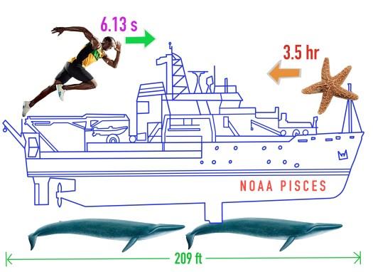 Madden Pisces diagram