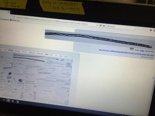 IFCB computer screen