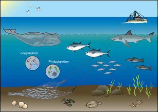 ocean ecosystem diagram