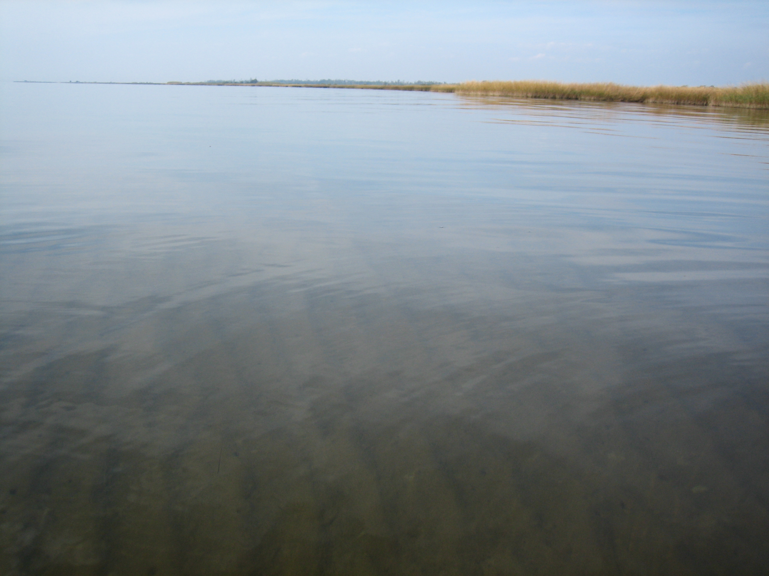 clear-wide-bayou
