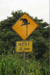 Tree kangaroo sign, but we never saw one