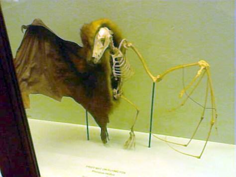 Horniman museum (19)