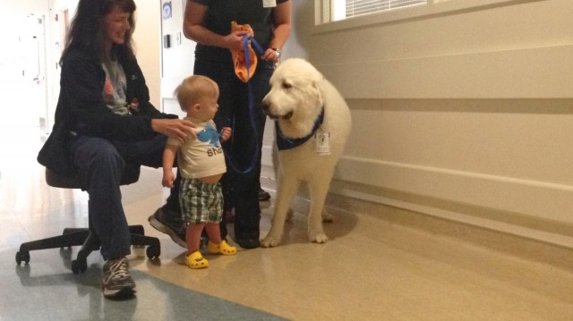 special needs benefits therapy dog
