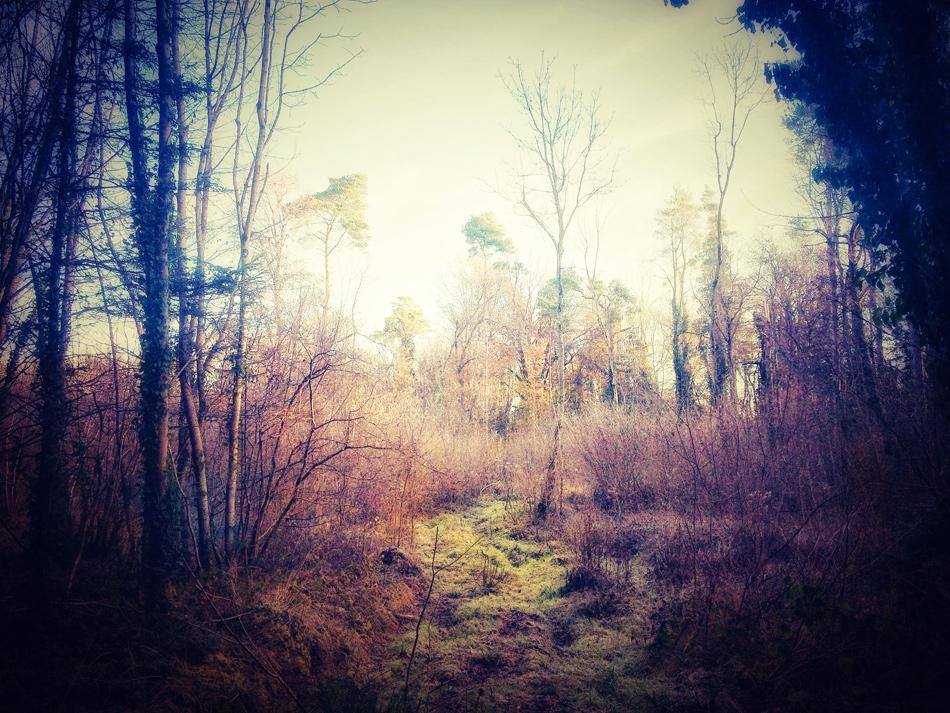 Photograph - Dunmore Wood, Durrow