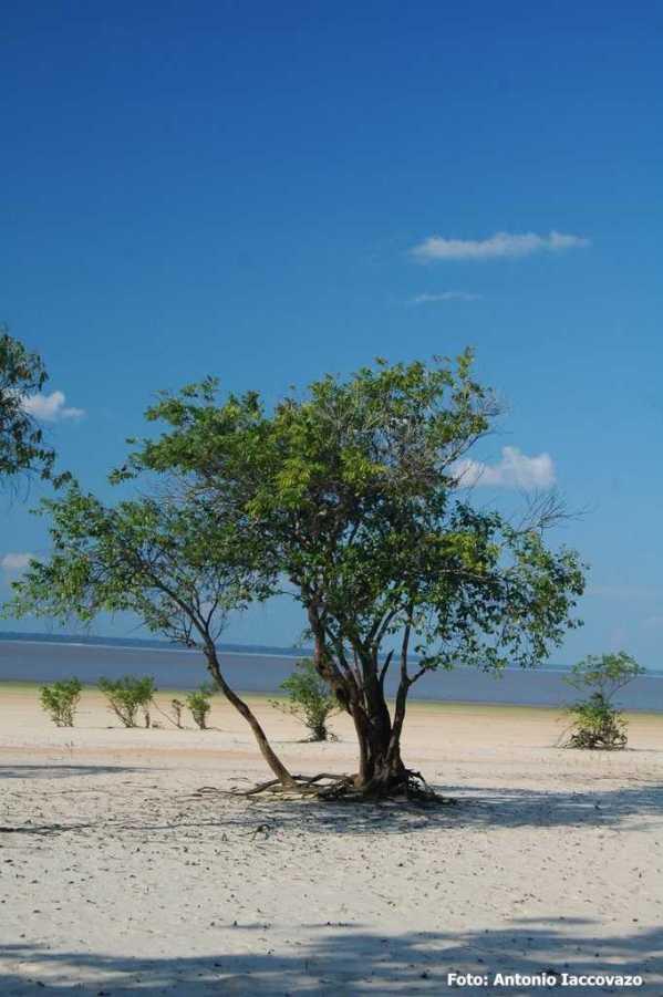 Praia da Freguesia-Coari-AM (Foto: Antonio Iaccovazo)