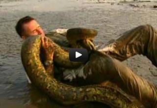 Anaconda passeando em igarapé
