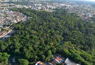 Reserva Florestal Adolpho Ducke / Foto Divulgação
