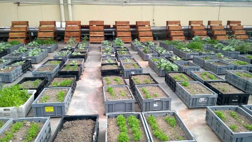Manauara Shopping cria usina de compostagem e distribui hortaliças para escolas da rede pública / Foto : Divulgação