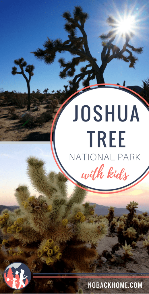 Exploring Joshua Tree with Kids - One Day Itinerary