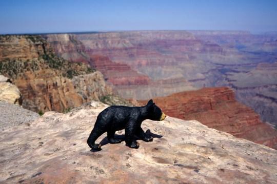Arizona and Utah Grand Canyon Road Trip
