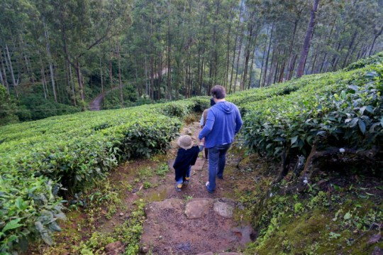Trekking in the hills of Munnar - Kerala with Kids